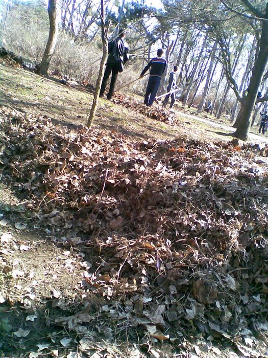 листья сгребать, субботник