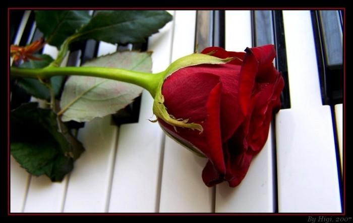 Love of the Universe 57216344_106585_rose_on_piano_by_yhdenenkelinunelma1