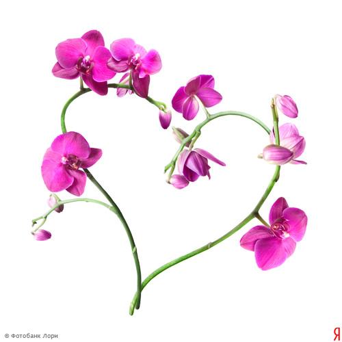 Сердце из орхидей (500x500, 44 Kb)
