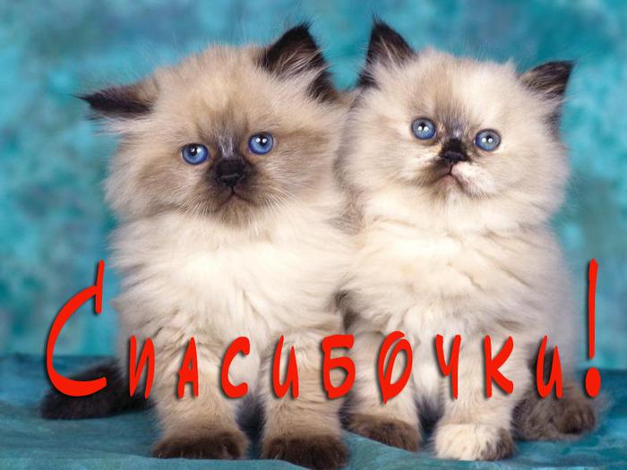 cats-40 (700x525, 114 Kb)