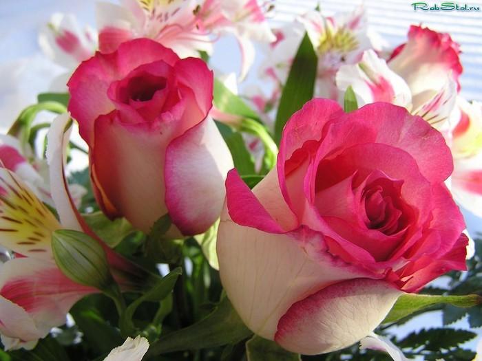 Какие цветы люблю я