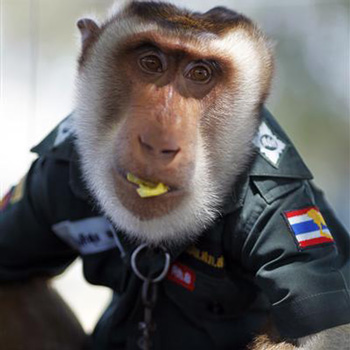 офицер полиции тайланда