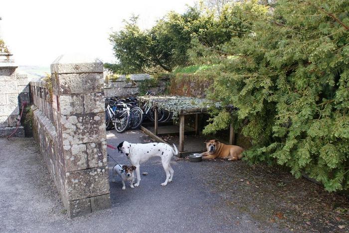 Замок Lanhydrock, графство Корнуолл. 74999