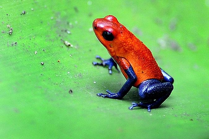 ядовитые жабы - Самое интересное в блогах