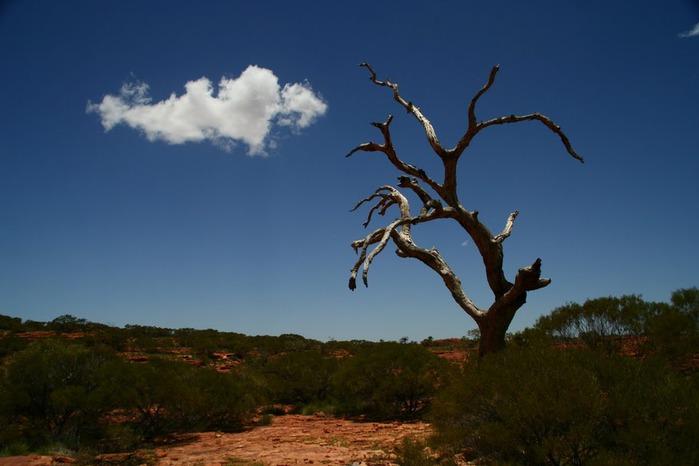 Королевский Каньон в Австралии 16791