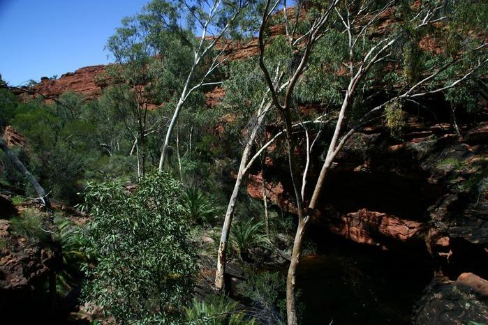 Королевский Каньон в Австралии 48612