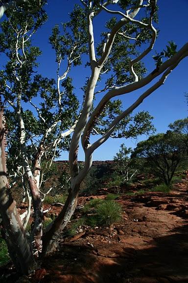 Королевский Каньон в Австралии 31217