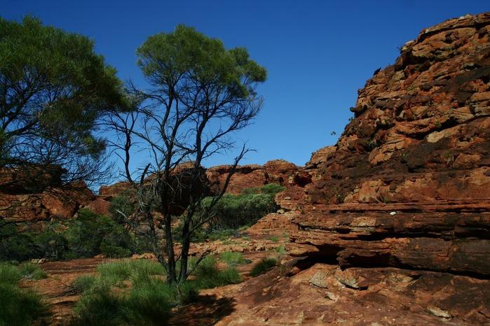 Королевский Каньон в Австралии 91699