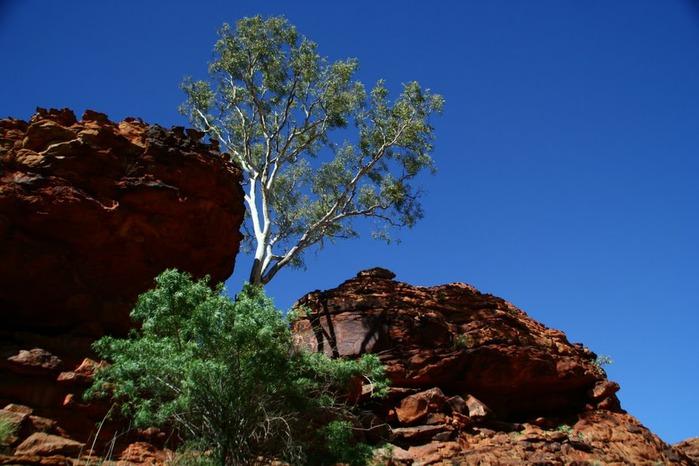 Королевский Каньон в Австралии 58743