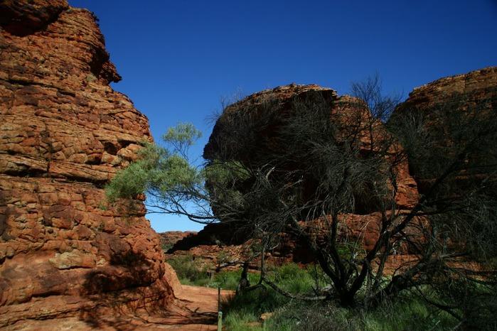 Королевский Каньон в Австралии 39100