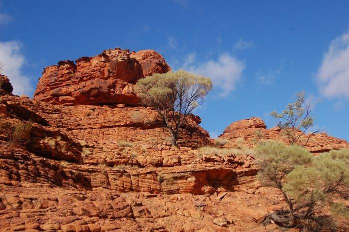 Королевский Каньон в Австралии 11880