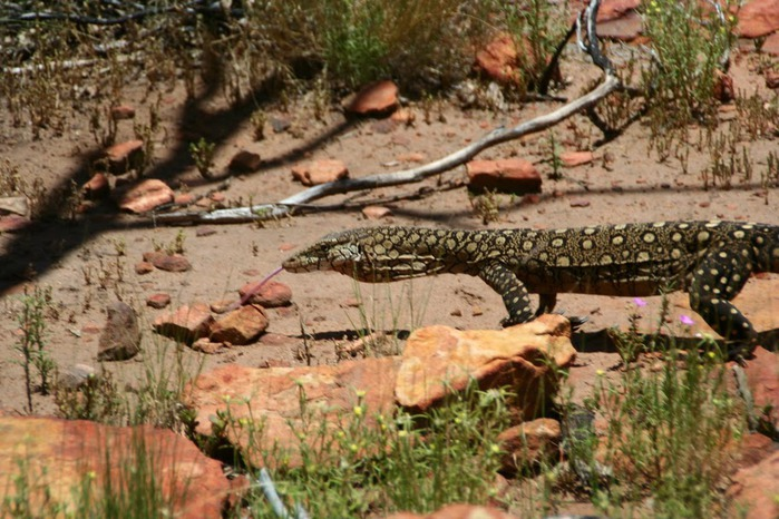 Королевский Каньон в Австралии 41913