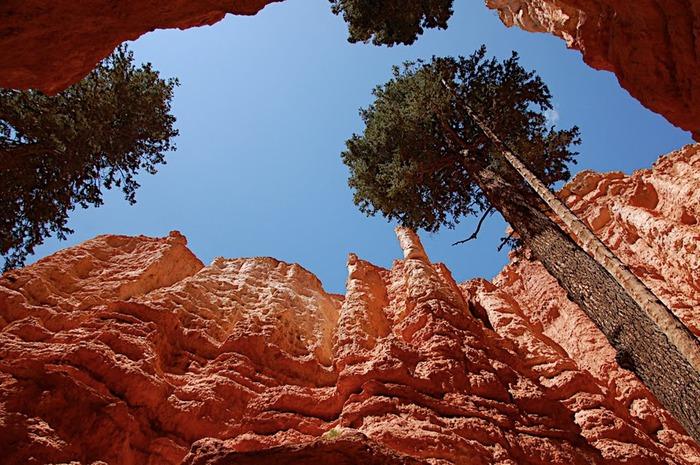Национальный Парк Брайс Каньон (Bryce Canyon National Park, Utah) 63619