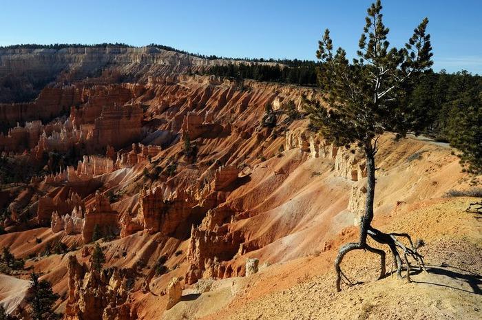 Национальный Парк Брайс Каньон (Bryce Canyon National Park, Utah) 96727