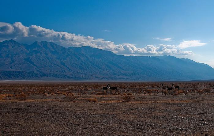 Национальный парк Долина Смерти | Death Valley National Park 74976