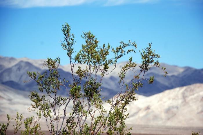 Национальный парк Долина Смерти | Death Valley National Park 65879