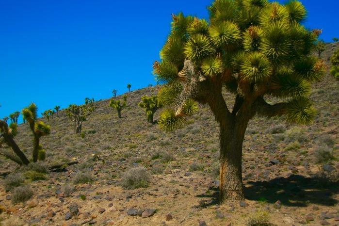 Национальный парк Долина Смерти | Death Valley National Park 38951