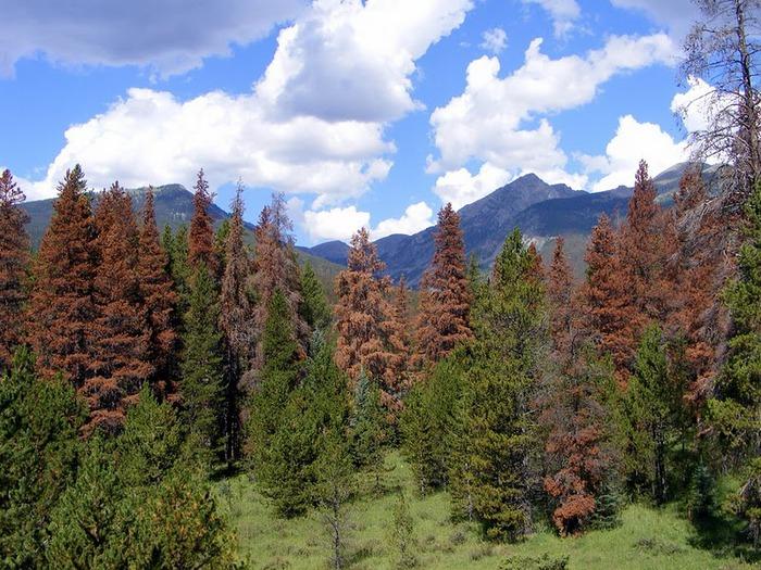 Национальный парк Rocky Mountain 11072