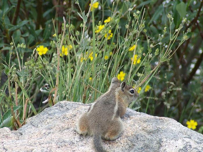 Национальный парк Rocky Mountain 96454