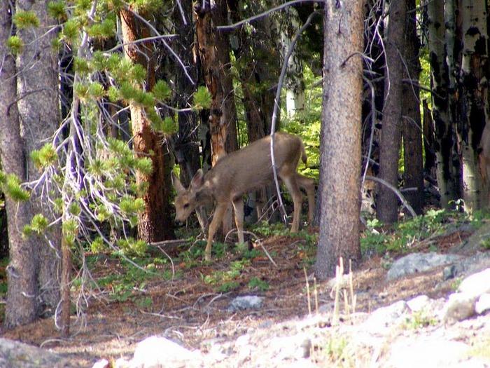 Национальный парк Rocky Mountain 57853