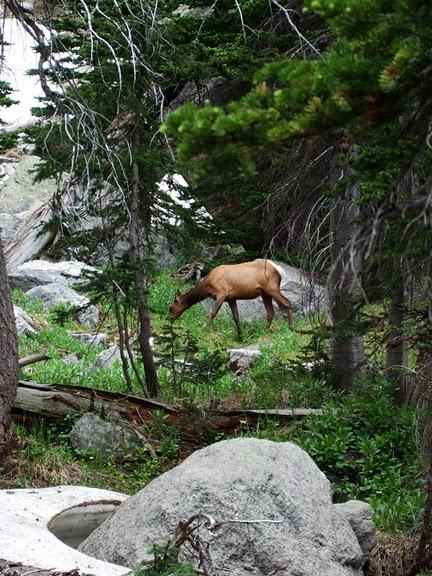 Национальный парк Rocky Mountain 45340