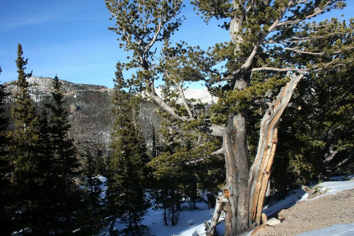 Национальный парк Rocky Mountain 74878