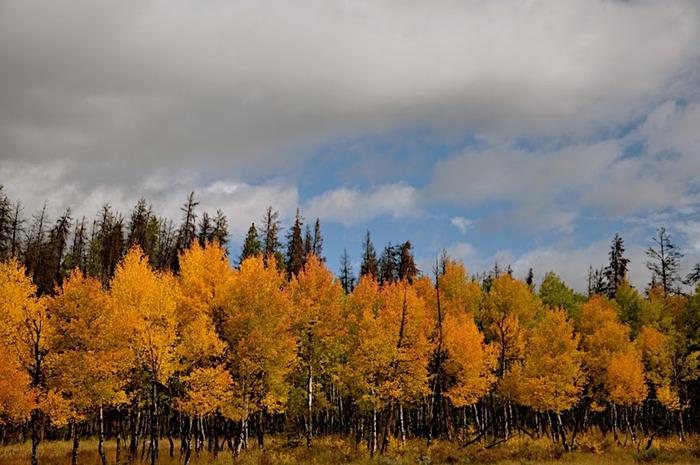 Национальный парк Rocky Mountain 34441