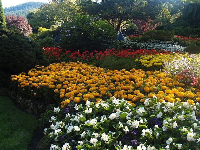 Сады Бучартов на острове Ванкувер. The Butchart Gardens. 95701