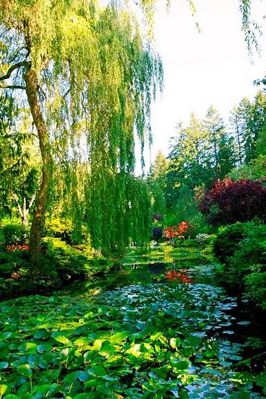 Сады Бучартов на острове Ванкувер. The Butchart Gardens. 65032