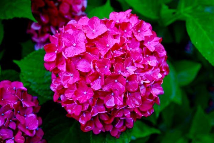 Сады Бучартов на острове Ванкувер. The Butchart Gardens. 66651