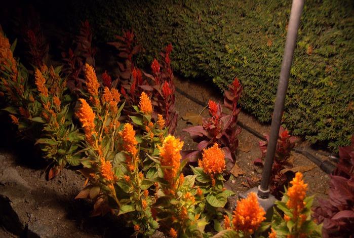 Сады Бучартов на острове Ванкувер. The Butchart Gardens. 41798