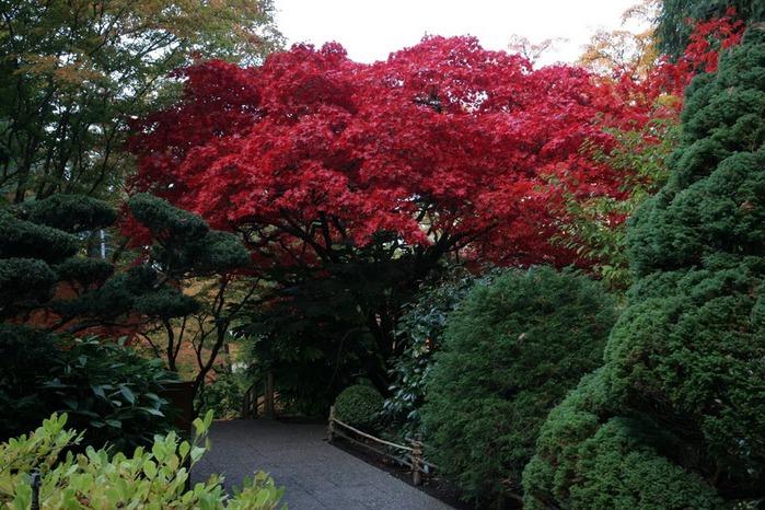 Сады Бучартов на острове Ванкувер. The Butchart Gardens. 42261