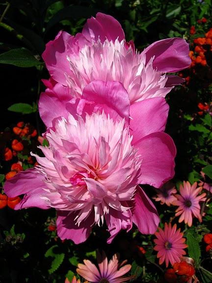 Сады Бучартов на острове Ванкувер. The Butchart Gardens. 53093