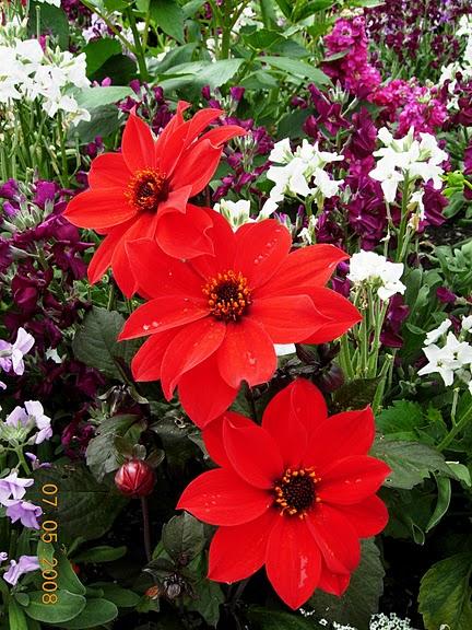 Сады Бучартов на острове Ванкувер. The Butchart Gardens. 90743