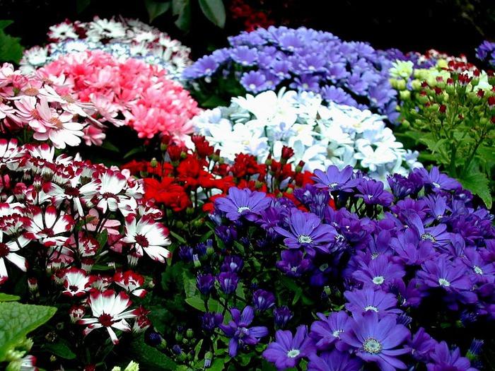 Сады Бучартов на острове Ванкувер. The Butchart Gardens. 39848