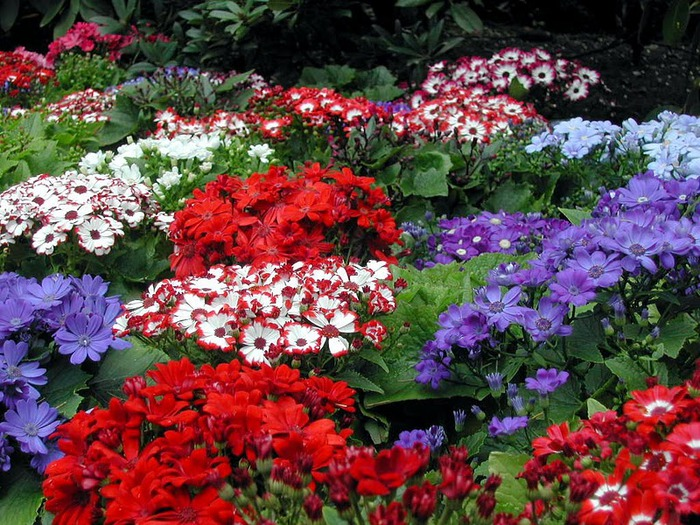 Сады Бучартов на острове Ванкувер. The Butchart Gardens. 17140