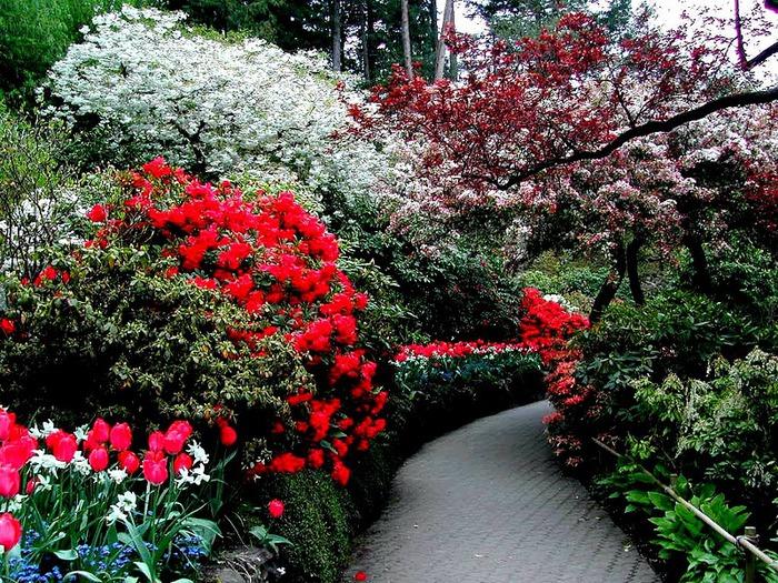 Сады Бучартов на острове Ванкувер. The Butchart Gardens. 72273