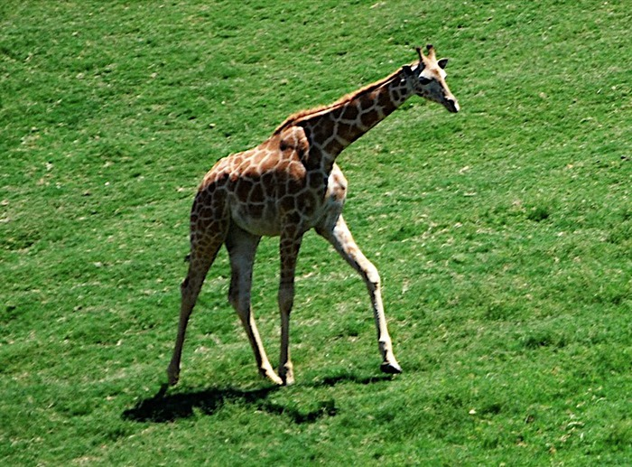 Парк Диких Животных (Wild Animal Park), San Diego 89075