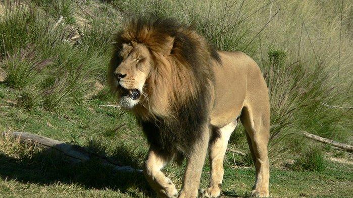 Парк Диких Животных (Wild Animal Park), San Diego 42997