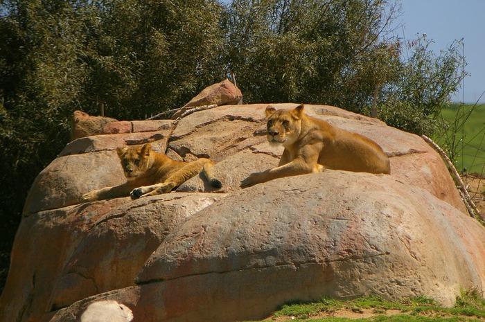 Парк Диких Животных (Wild Animal Park), San Diego 95583