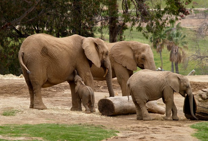 Парк Диких Животных (Wild Animal Park), San Diego 49707