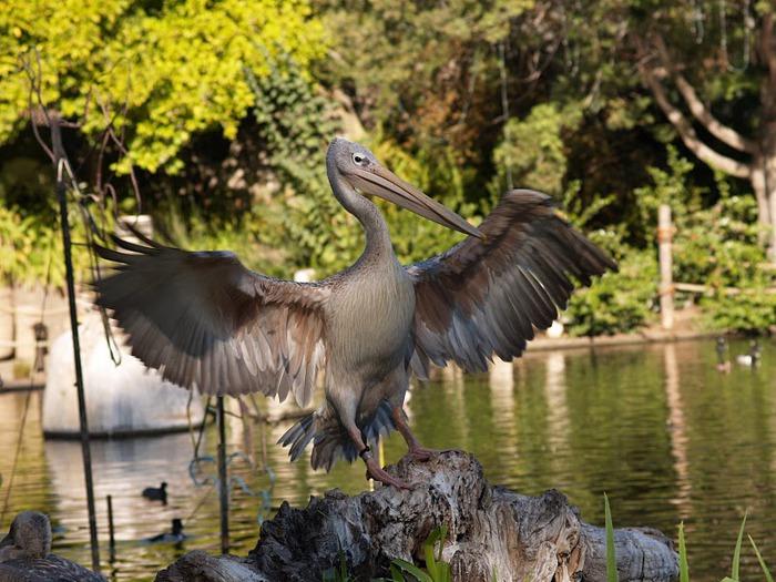 Парк Диких Животных (Wild Animal Park), San Diego 84883
