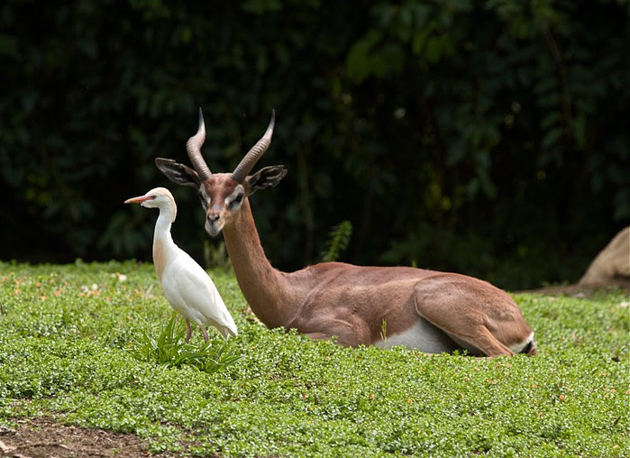 Парк Диких Животных (Wild Animal Park), San Diego 62738