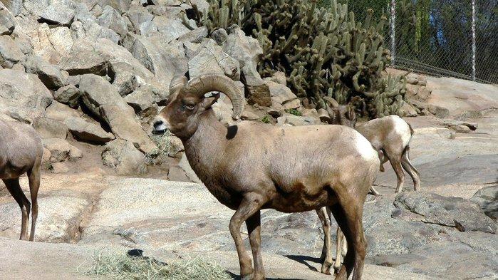 Парк Диких Животных (Wild Animal Park), San Diego 96645