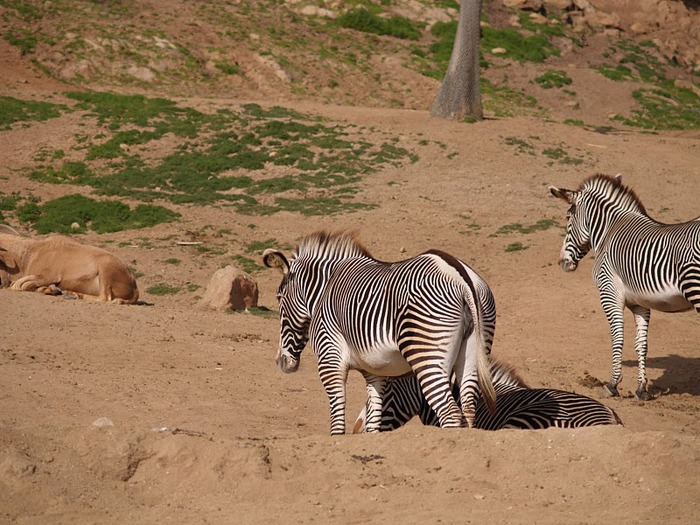 Парк Диких Животных (Wild Animal Park), San Diego 46422