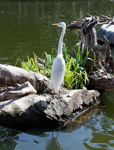 Парк Диких Животных (Wild Animal Park), San Diego 17750