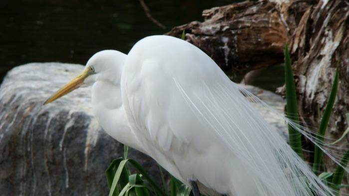 Парк Диких Животных (Wild Animal Park), San Diego 58703