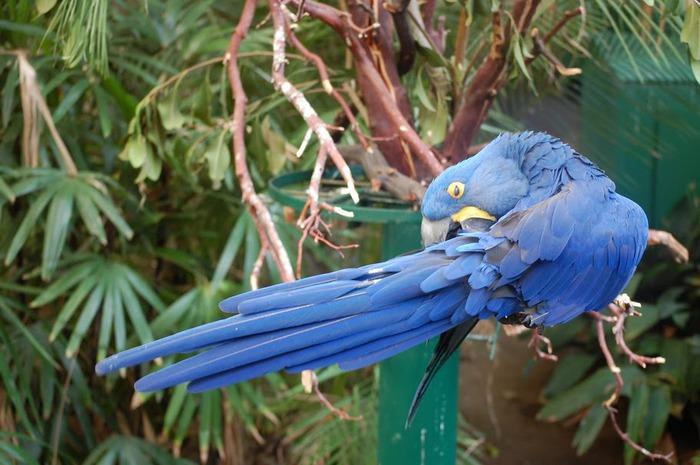 Парк Диких Животных (Wild Animal Park), San Diego 45375