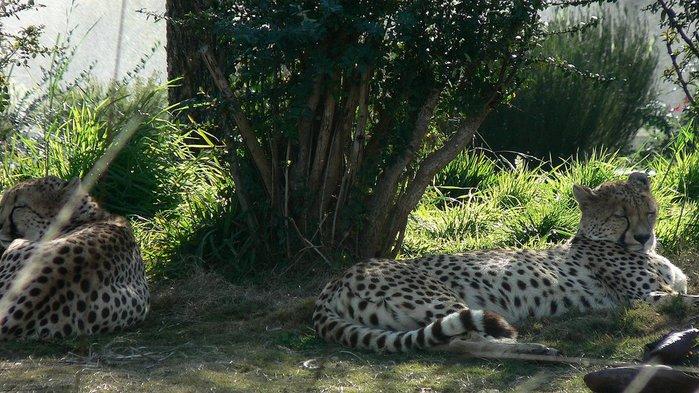 Парк Диких Животных (Wild Animal Park), San Diego 65754