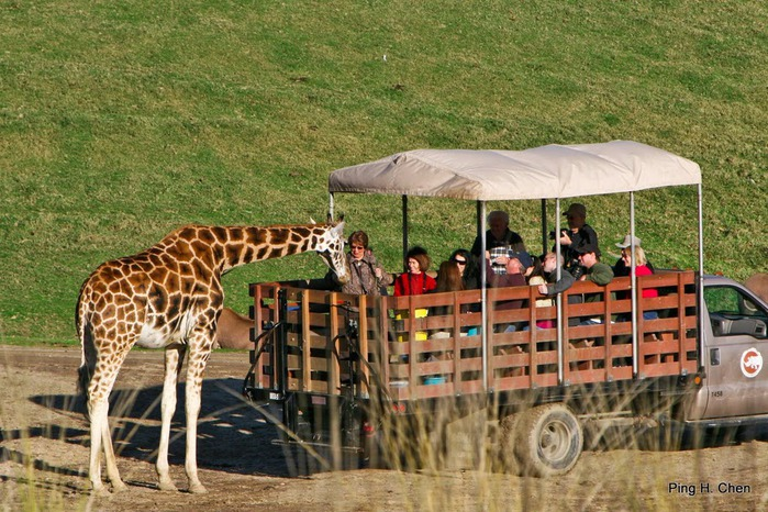 Парк Диких Животных (Wild Animal Park), San Diego 86674